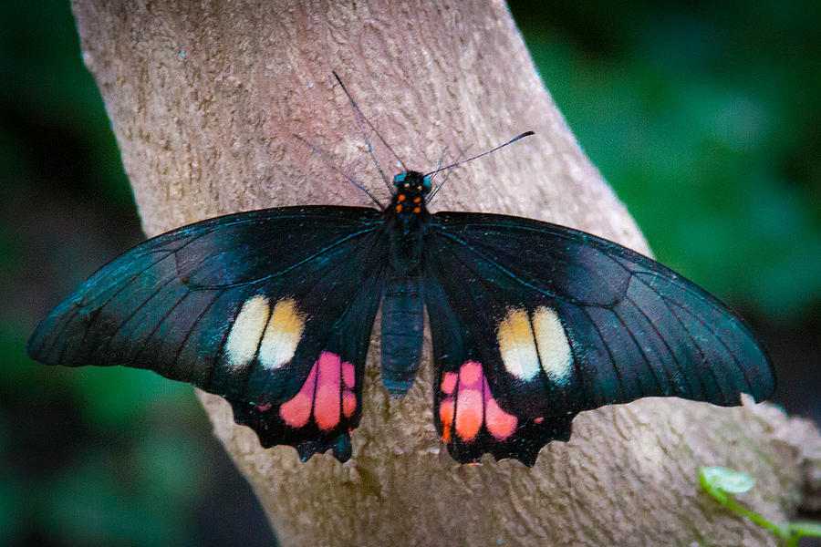 Butterfly Photograph - Resting Butterfly by David Patterson