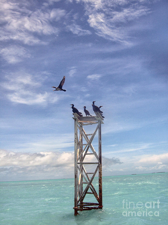 Vertical Photograph - Revised Image Of Birds On Wooden Stand In The Ocean Off Key West by Christopher Purcell