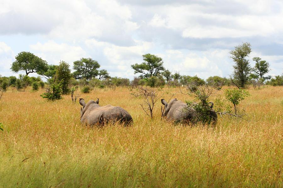 Rhino Photograph - Rhino Pair by Deborah Hall Barry