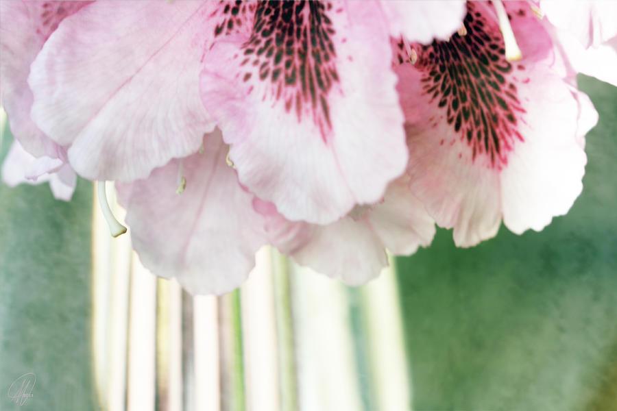 Rhododendron Digital Art - Rhododendron Refraction by Margaret Hormann Bfa