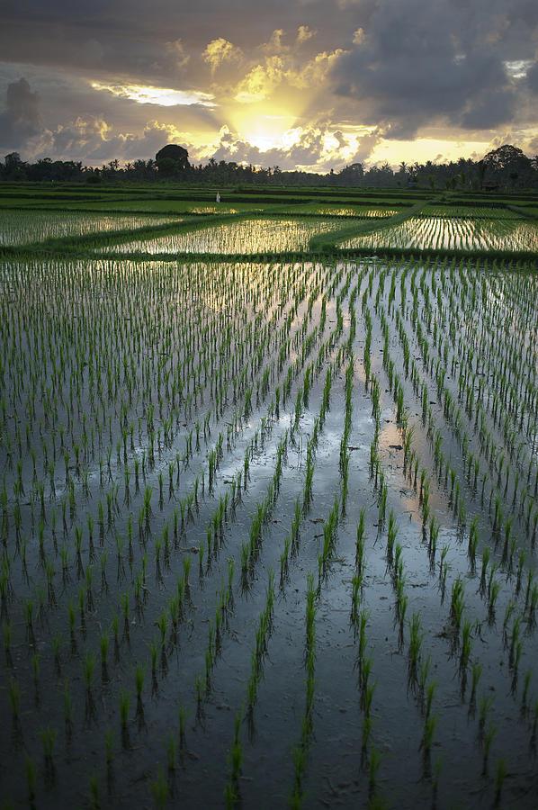 Cloud Photograph - Rice Fields, Near Ubud Bali, Indonesia by Huy Lam