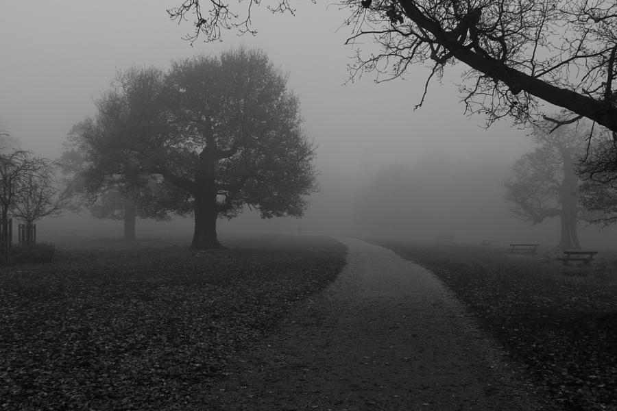 Richmond Park Photograph