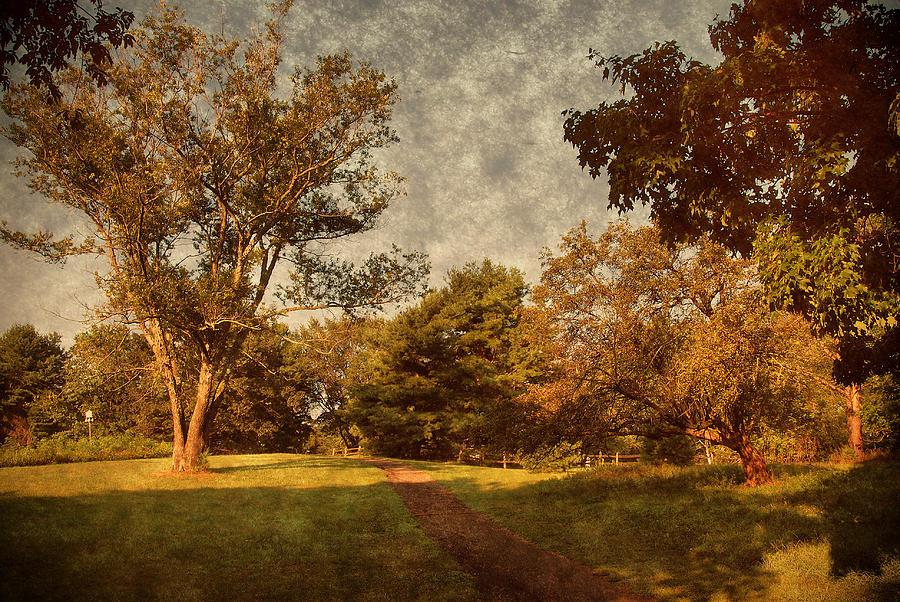 Nature Photograph - Ridge Walk - Holmdel Park by Angie Tirado