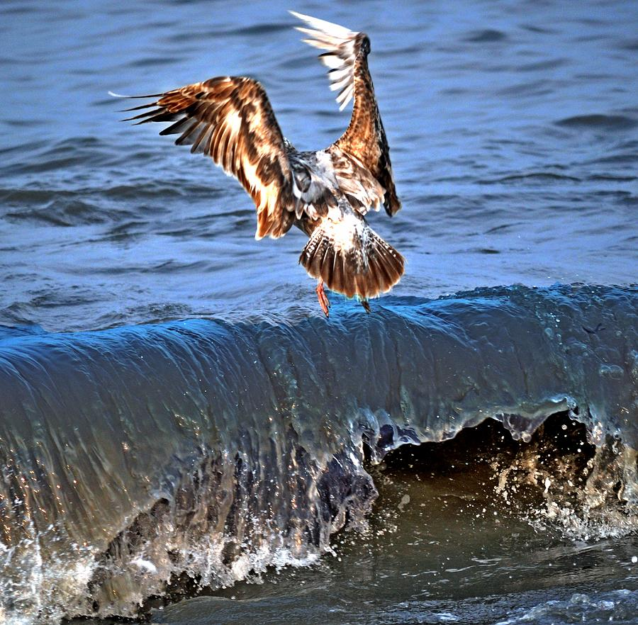 Seagulls Photograph - Riding The Wave  by Debra  Miller