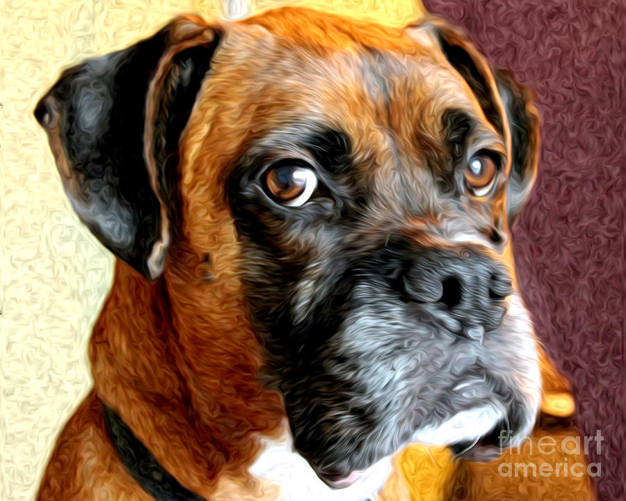 Boxer Photograph - Riggs by Anne Raczkowski
