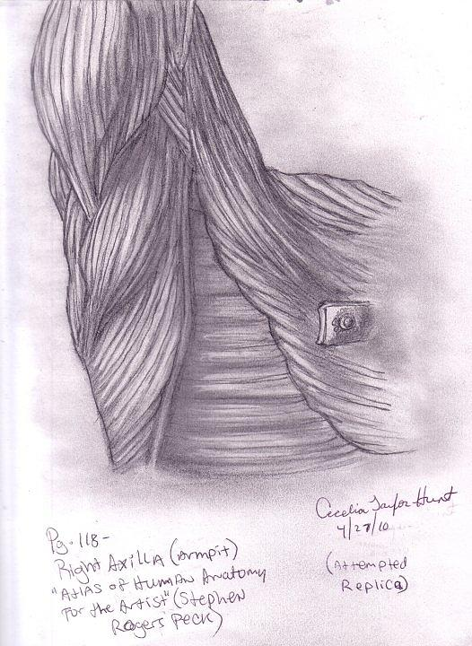 Pencil Drawing Drawing - Right Axilla by Cecelia Taylor-Hunt