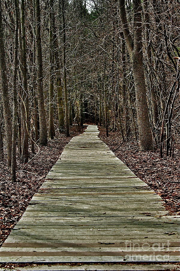 Trees Photograph - Right Path by Gregory Dragan