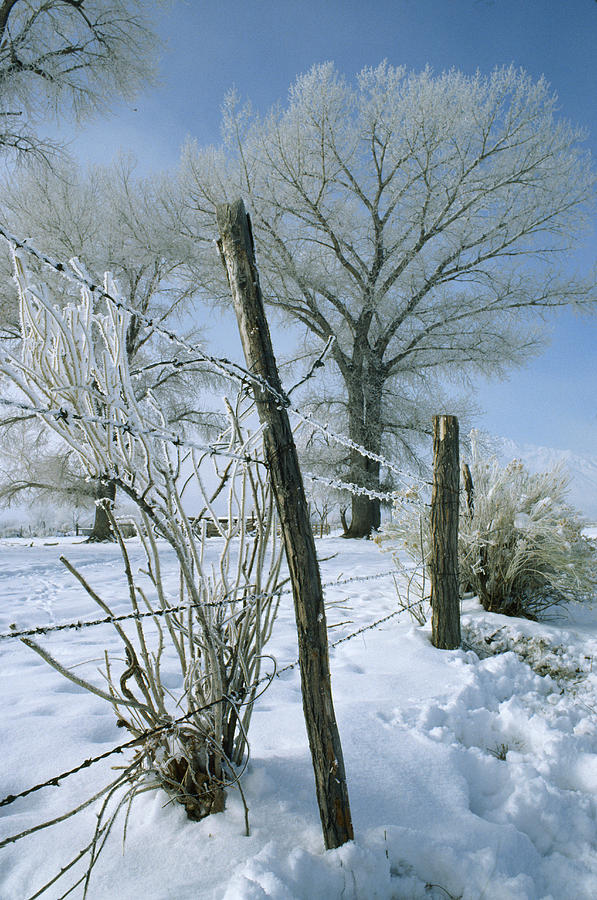 Barbed Wire Photograph - Rime From Rare Fog Coats Fence by Gordon Wiltsie
