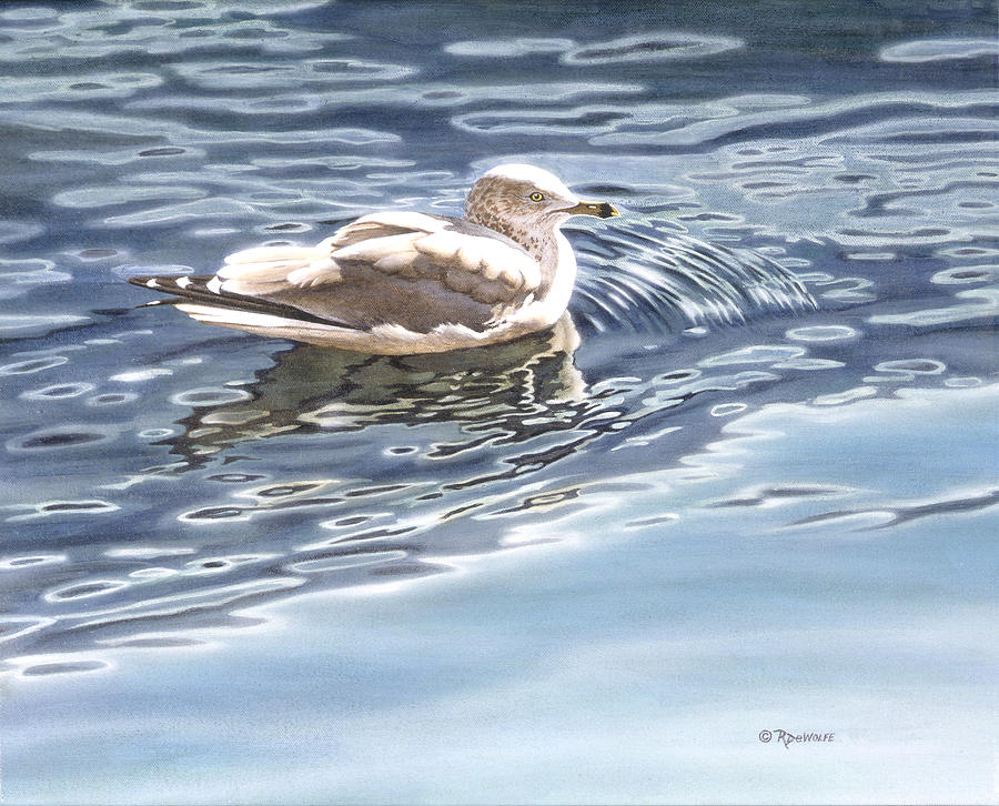 Sea Gull Painting - Ringed Bill Gull by Richard De Wolfe