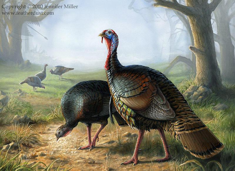Turkey Painting - Rio Grande Turkeys by Jennifer  Miller