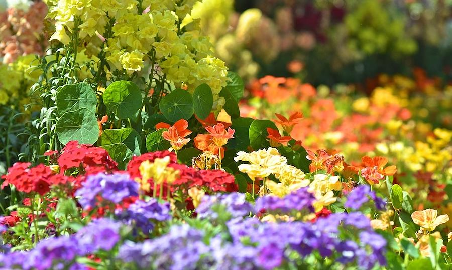 Spring Photograph - Riot Of Colours by Jyotsna Chandra