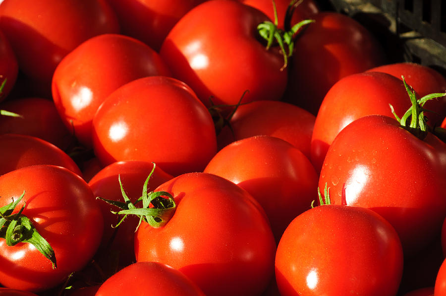 Harvest Photograph - Ripe Tomatoes by Connie Cooper-Edwards