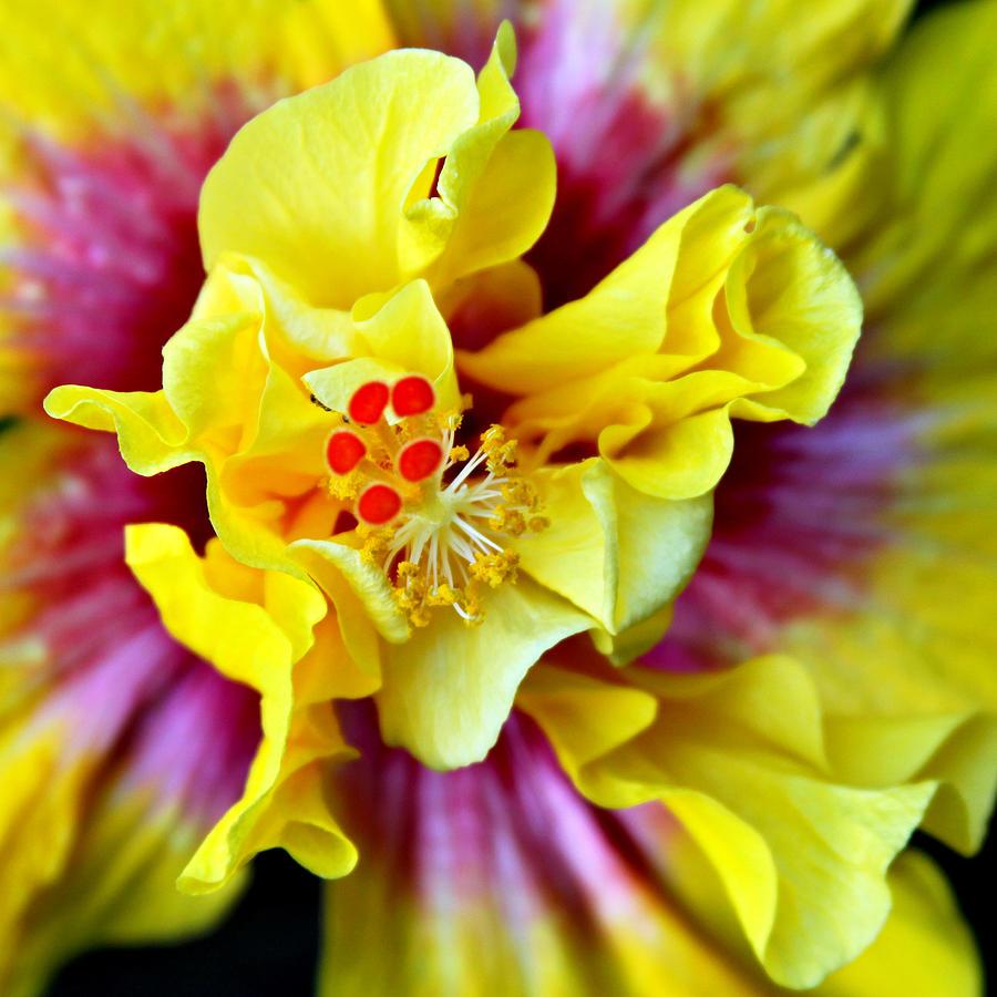 Flora Photograph - Rise And Shine Hula Girl by Karon Melillo DeVega