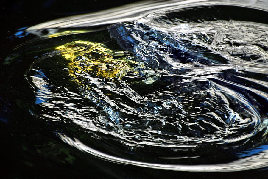 Water Photograph - Rising Koi by Don Mann