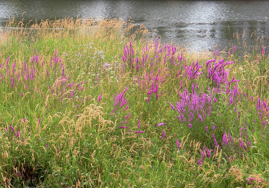 Columbia River Photograph - River Flowers by Fred Russell
