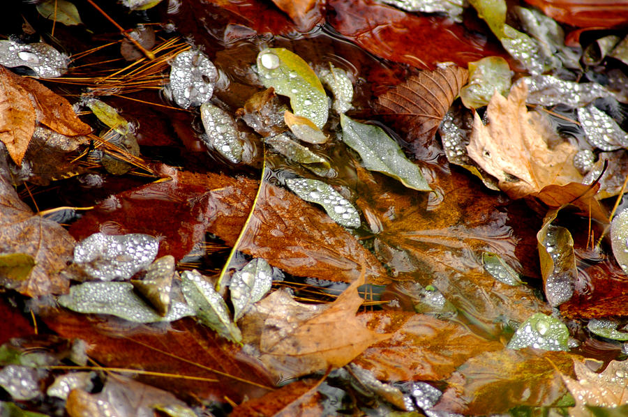 Usa Photograph - River Leaves by LeeAnn McLaneGoetz McLaneGoetzStudioLLCcom