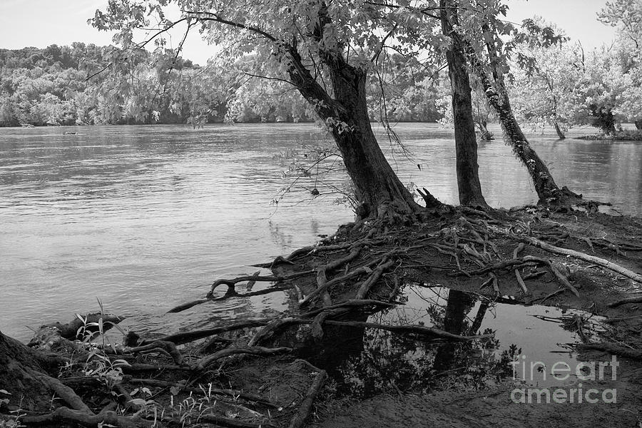 River Photograph - River-washed Roots by Susan Isakson