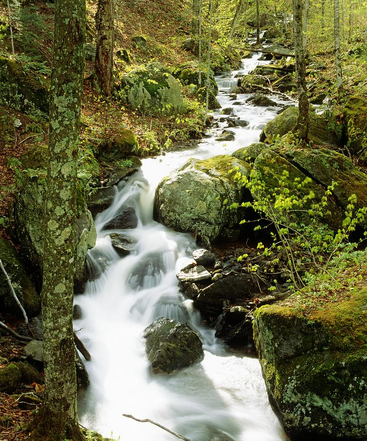 Brook Photograph - River With Trees In The Forest by David Chapman
