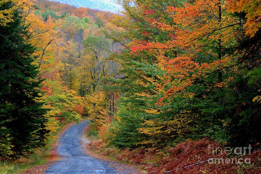 Season Photograph - Road Through Autumn Woods by Larry Landolfi and Photo Researchers