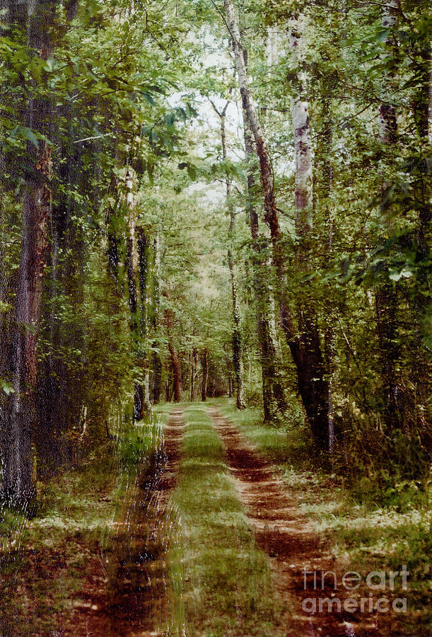 Forest Photograph - Road To Anywhere by Bob Senesac
