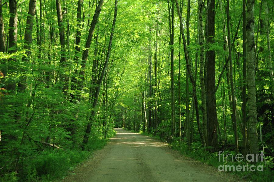 Green Photograph - Road To Jasper Woods by Ronald Grogan