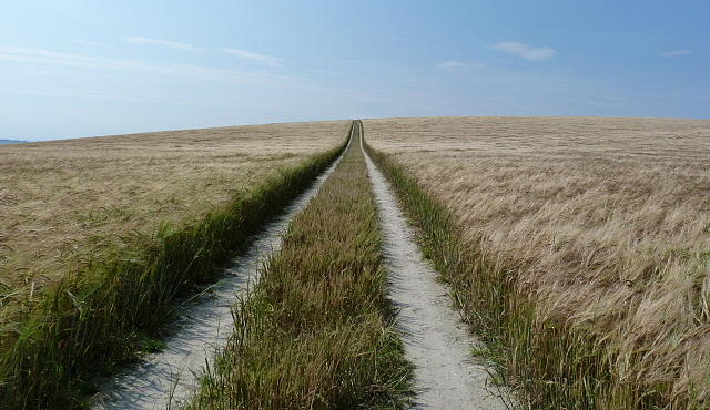 Wheat Field Photograph - Road To No Where by Karen Grist