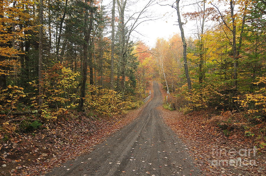 White Mountains National Forest Photograph - Roads Less Traveled by Catherine Reusch Daley