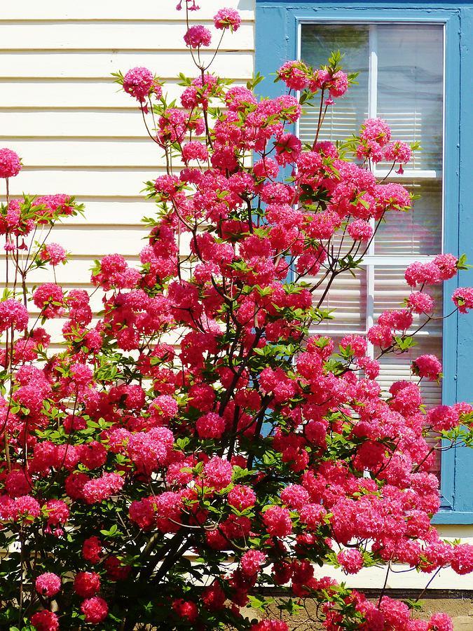 Flowers Photograph - Roadside Beauty In Ny by Jeanette Oberholtzer