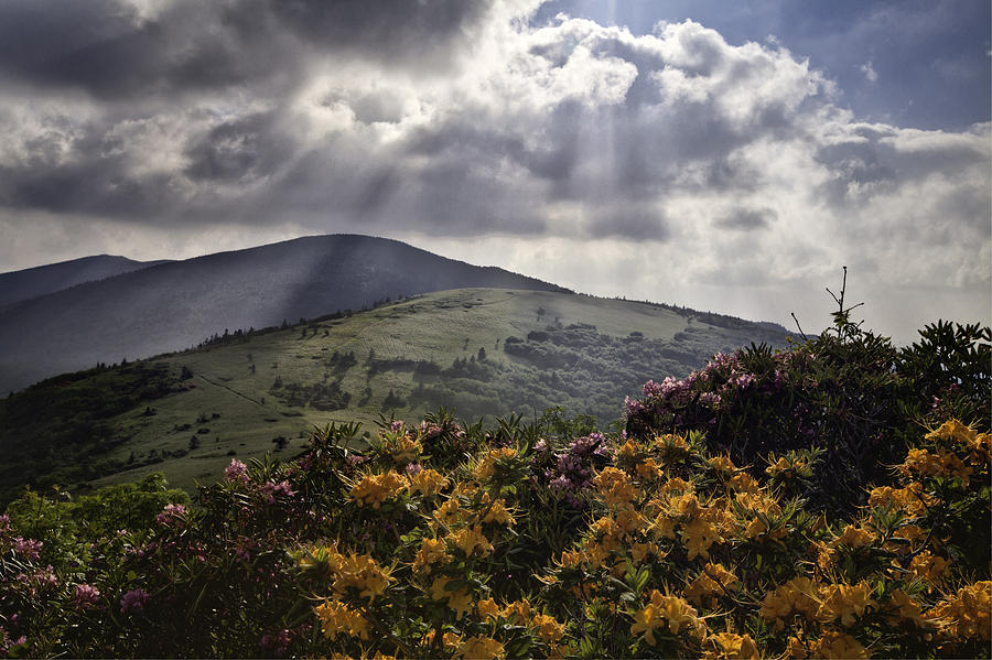 Flame Azalea Photograph - Roan Mountain Afternoon by Rob Travis