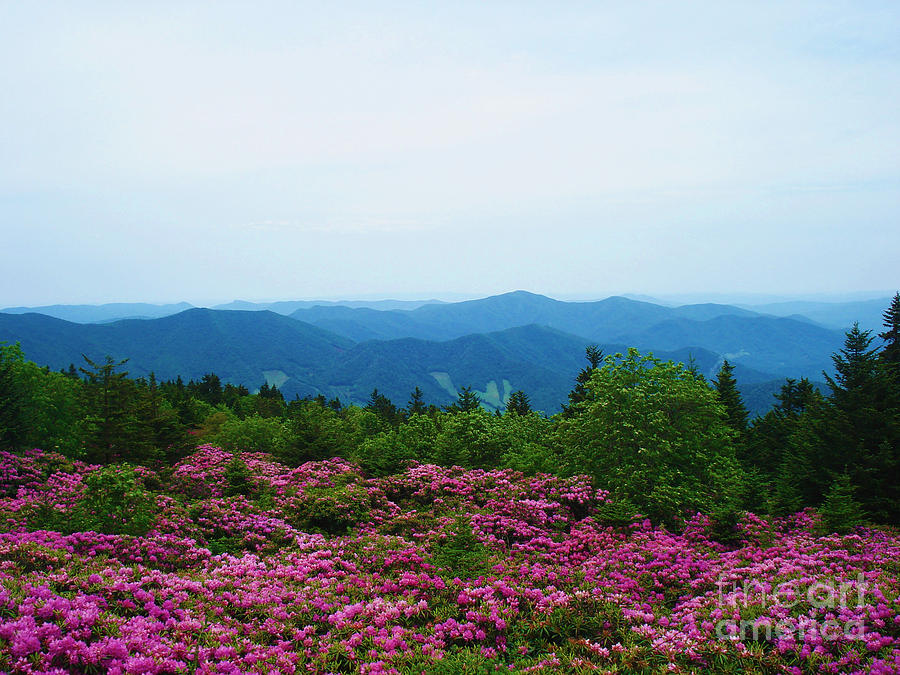 Nc Photograph - Roan Mountain by Crystal Joy Photography