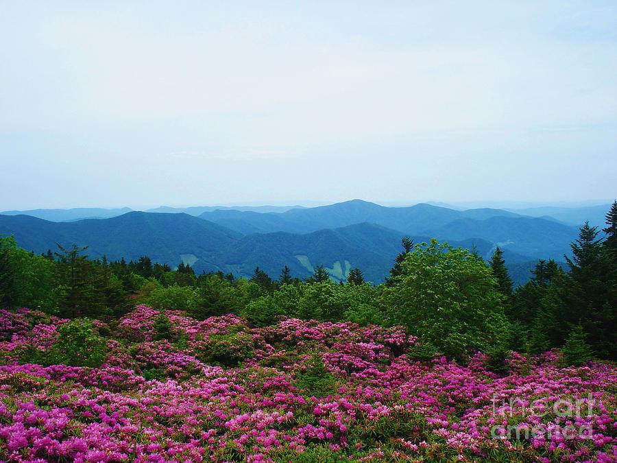 Roan Mountain Photograph - Roan Mountain by Crystal Joy Photography
