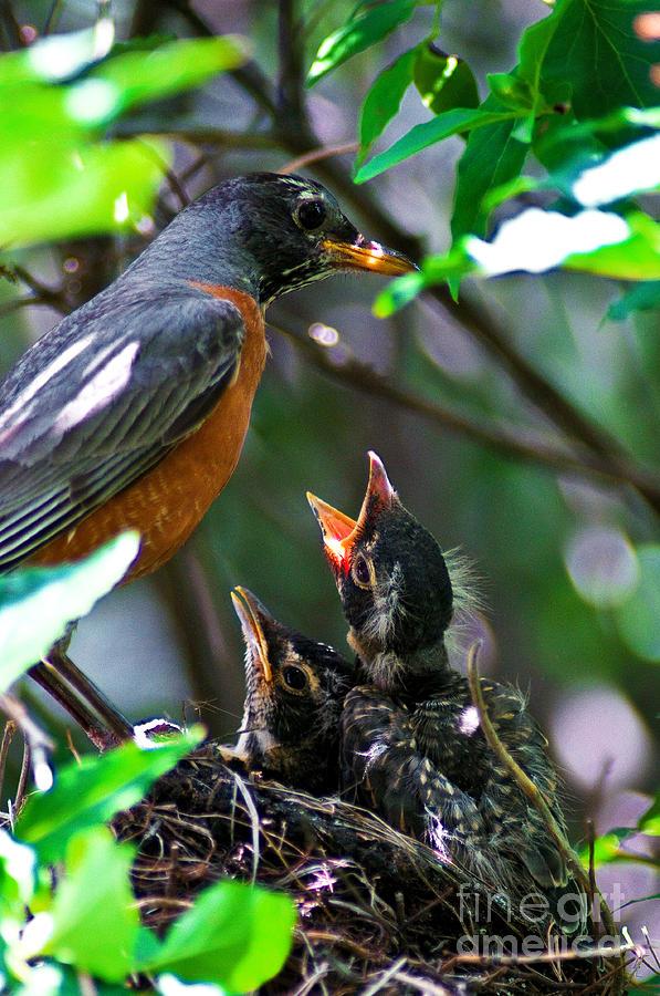 Robin Family Photograph