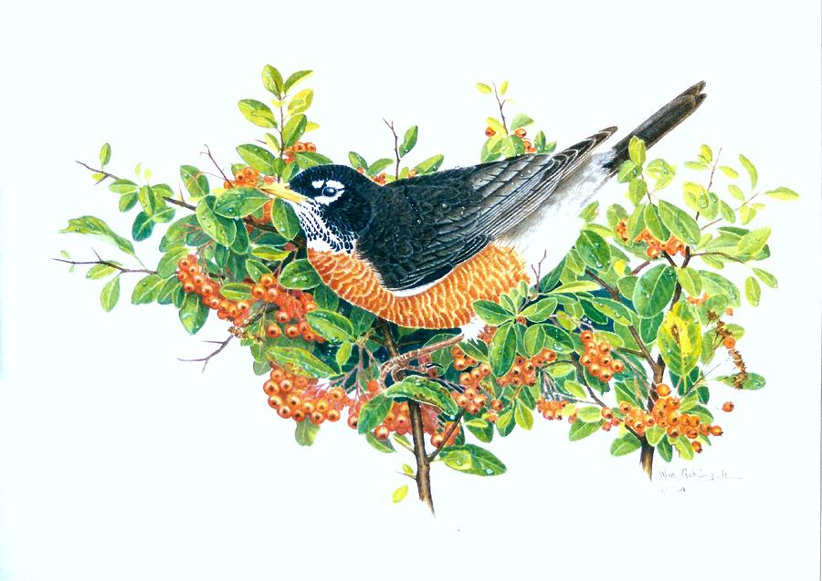 Robin Painting - Robin on Pyracantha by Bill Gehring
