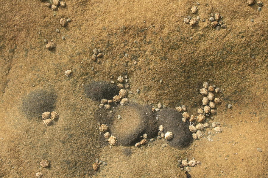 Rocks Photograph - Rock And Shells by Suzanne Lorenz