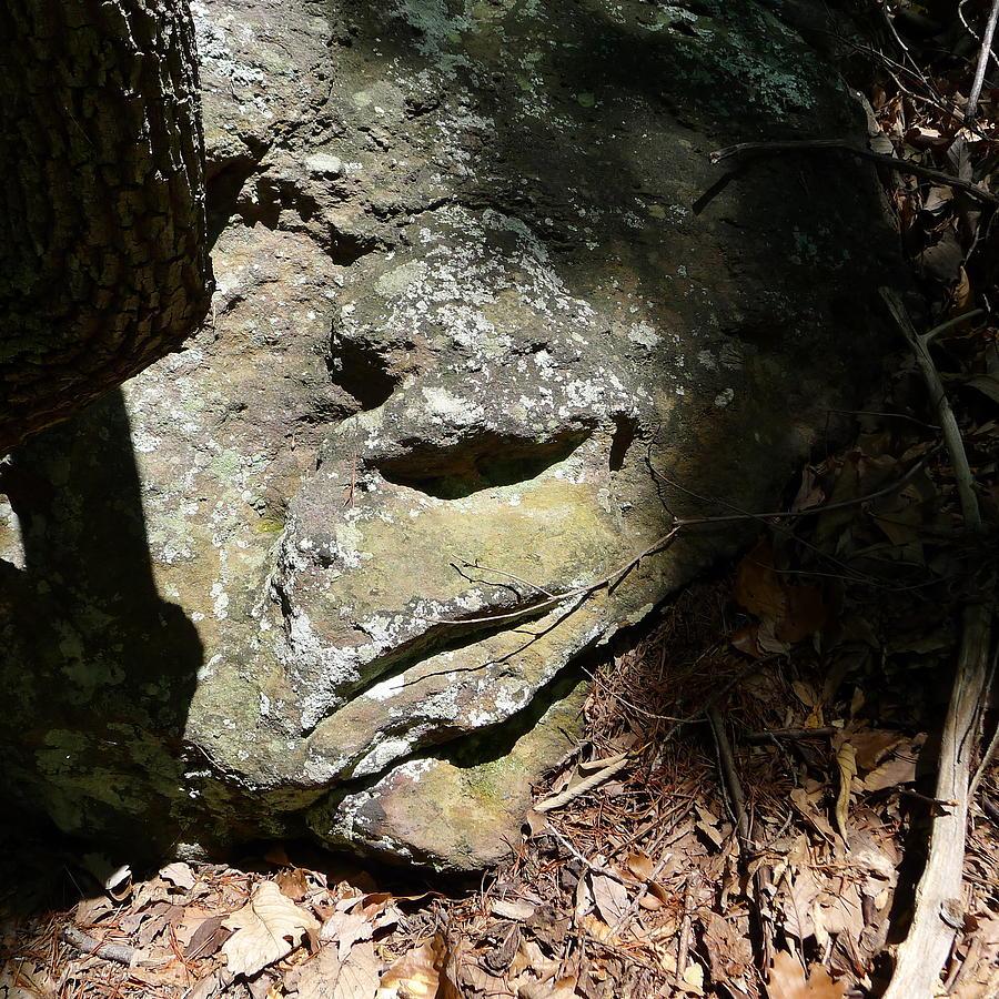 Moss Photograph - Rock Face by Joel Deutsch