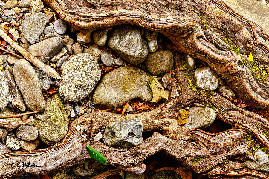 Natural Photograph - Rocks And Roots by Christopher Holmes