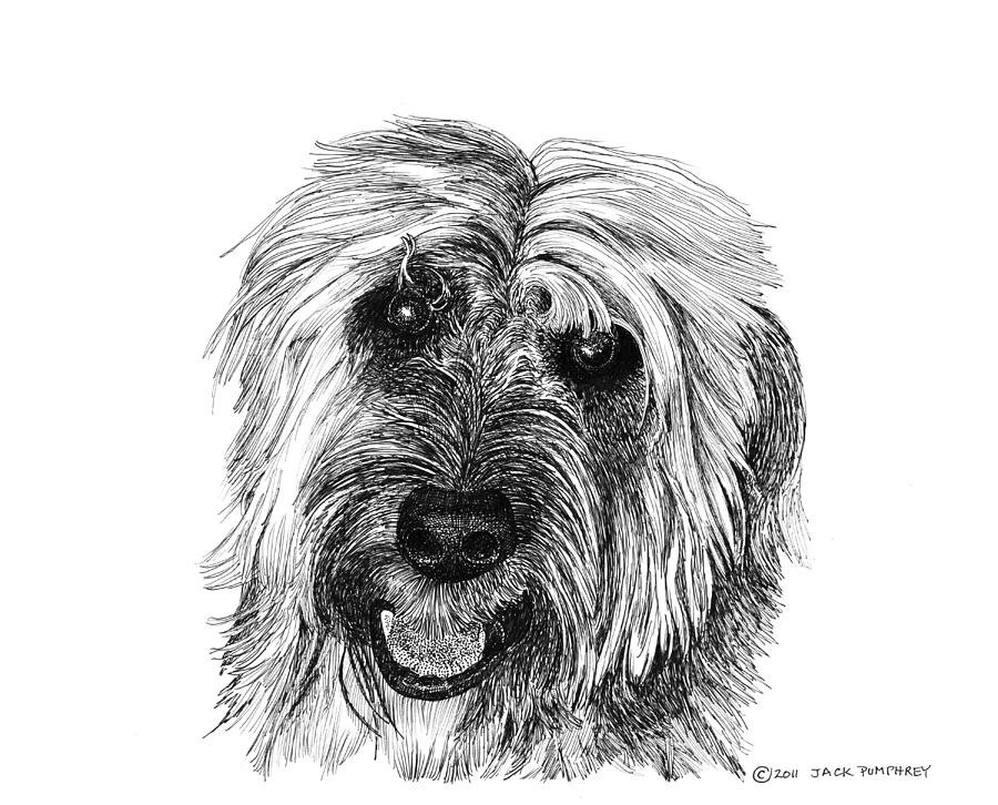 Pen And Ink Art Of Rocky Whose Owner Drawing - Rocky by Jack Pumphrey