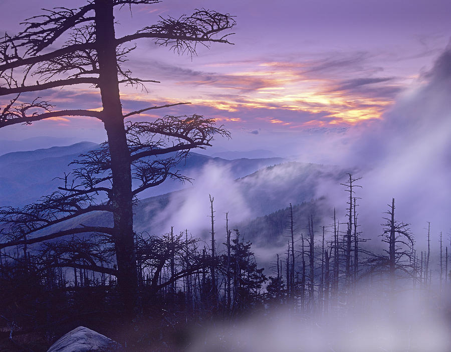 Rolling Fog On Clingmans Dome Great Photograph by Tim Fitzharris