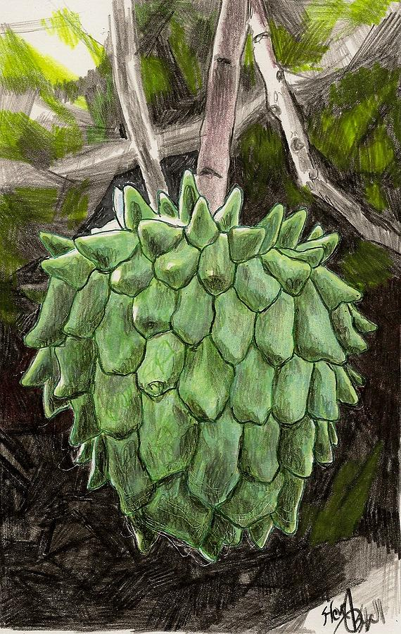 Fruit Drawing - Rollinia by Steve Asbell