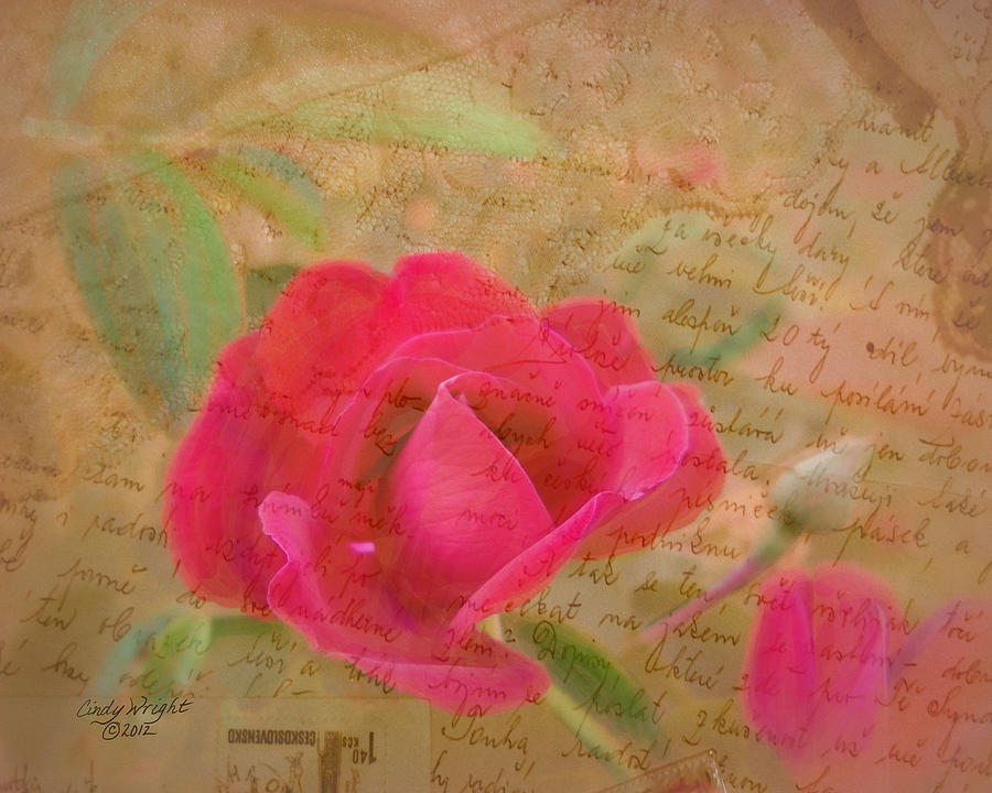 Cindy Photograph - Romantic Rose Notes by Cindy Wright