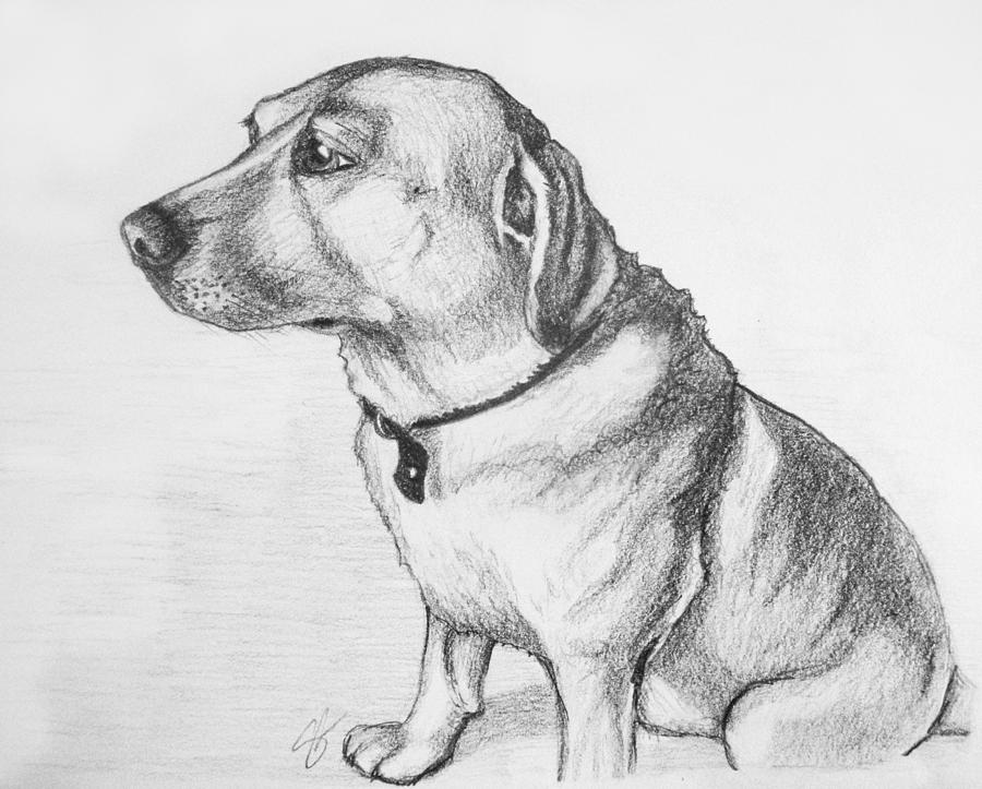 Dog Drawing - Romeo by Sara Coolidge