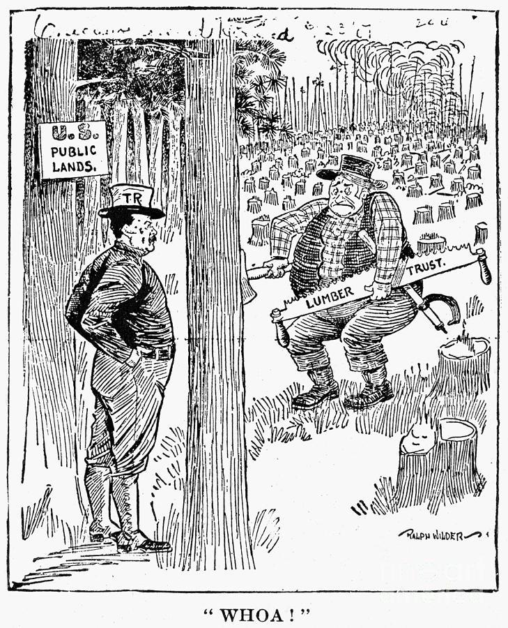 1906 Photograph - Roosevelt Cartoon, 1900s by Granger