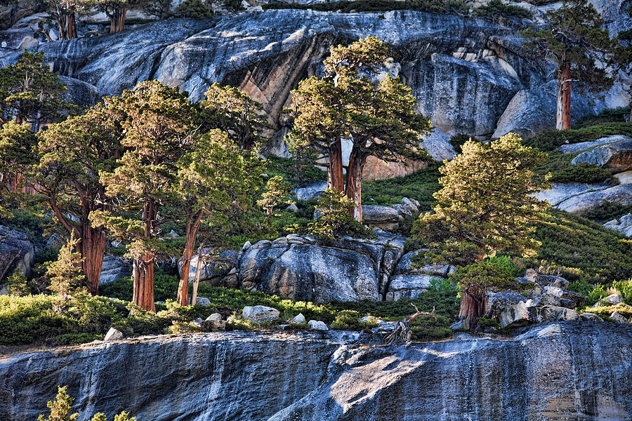 Granite Photograph - Rooted In Solid Rock by Bonnie Bruno