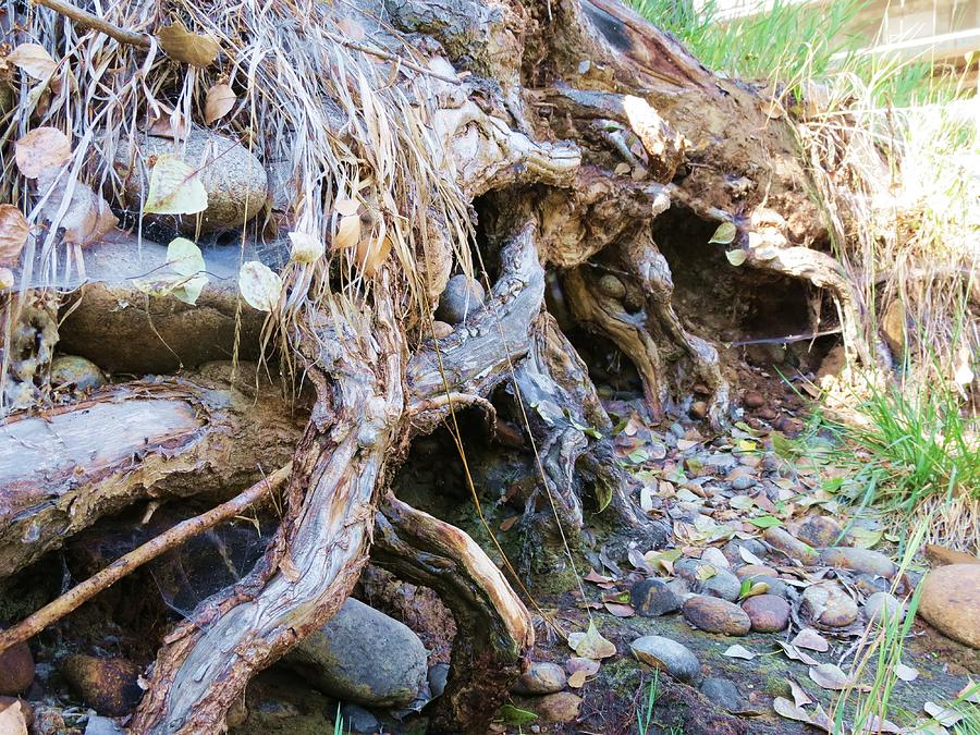 Landscape Photograph - Roots And Stones by Don Barnes