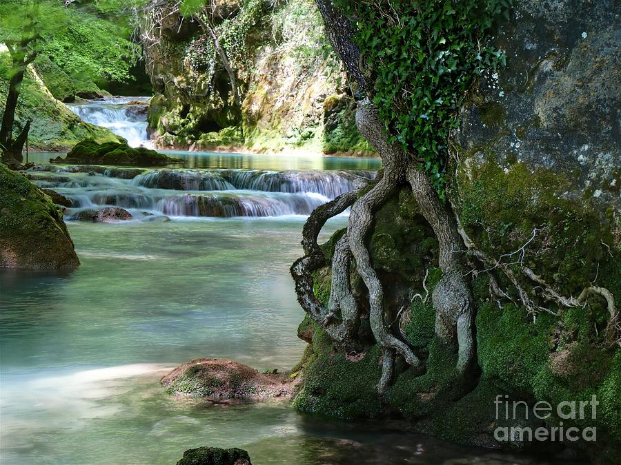 Root Photograph - Roots And Waterfalls by Alfredo Rodriguez
