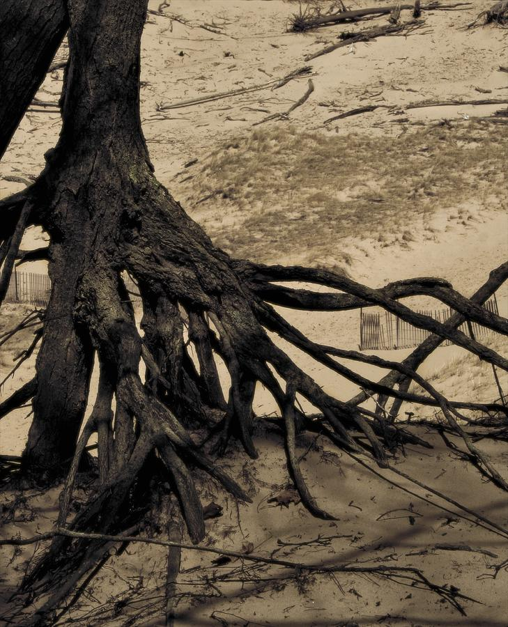 Tree Photograph - Roots by Odd Jeppesen
