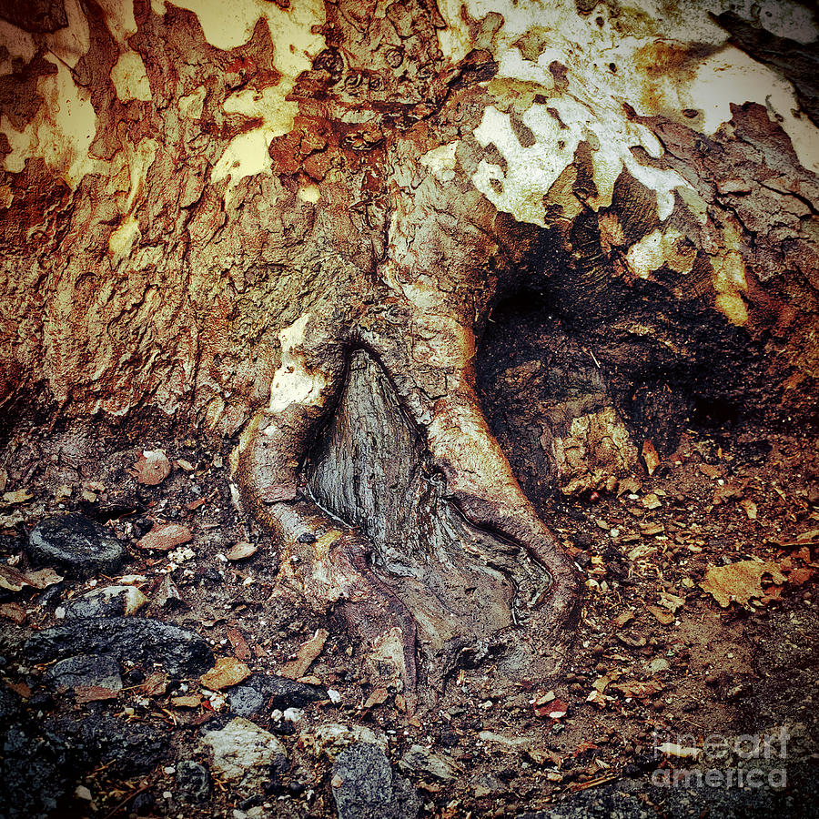 Roots Photograph - Roots by Silvia Ganora