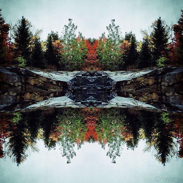 Symmetry Photograph - Rorschach Natura by Natasha Marco