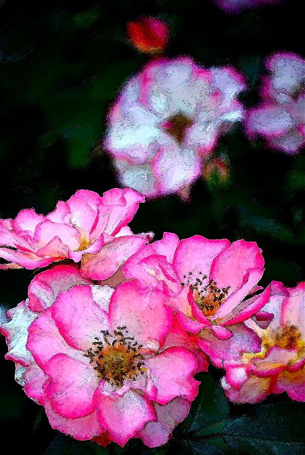 Floral Photograph - Rose 121 by Pamela Cooper