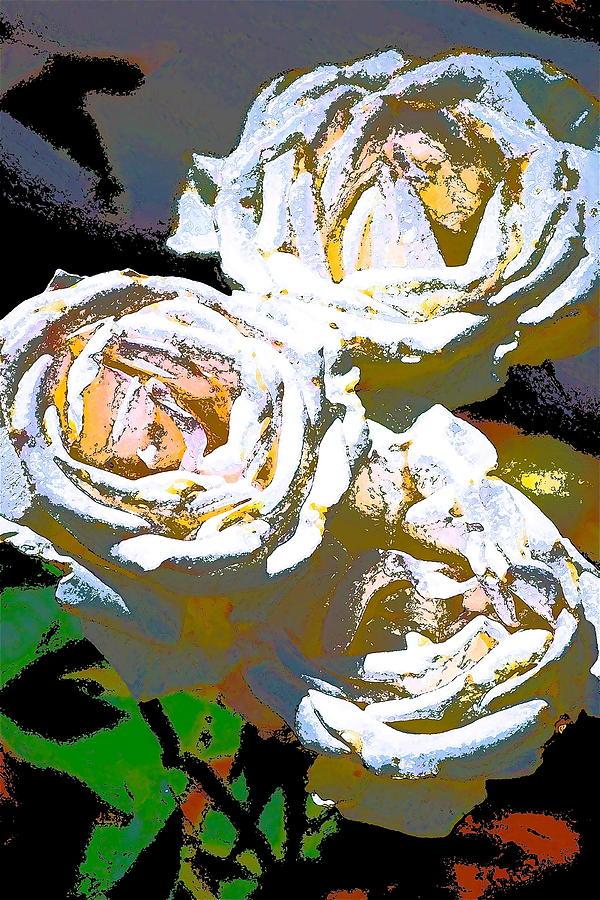 Floral Photograph - Rose 126 by Pamela Cooper